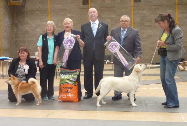 Reserve Best in Show Labrador Puppy Kimbajak Bella Giola