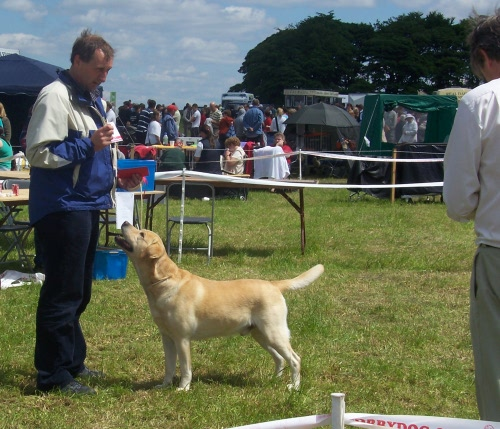 Labrador, Max winning his class at Honley Show